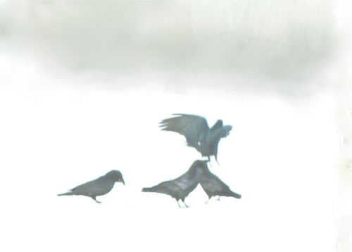 Winter Ravens, Allan Hayton